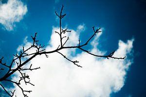 De 1e dag waarop je de lente ruikt van Tessa de Geus