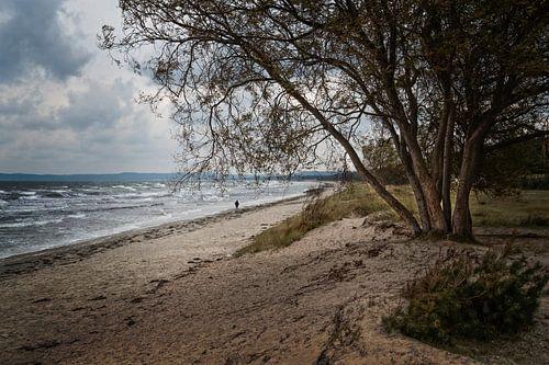 Prora beach van