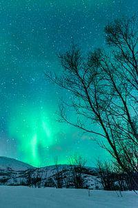 Noorderlicht boven de Lofoten in Noorwegen