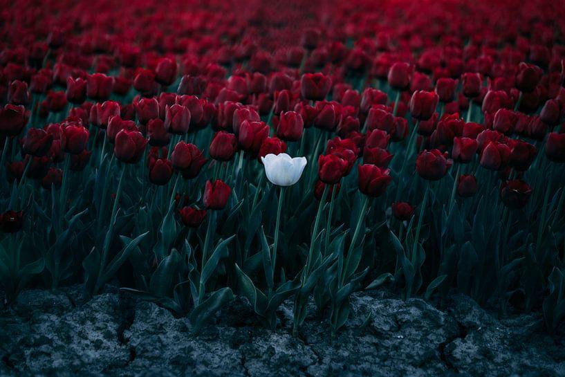 Roos van Oscar van Crimpen