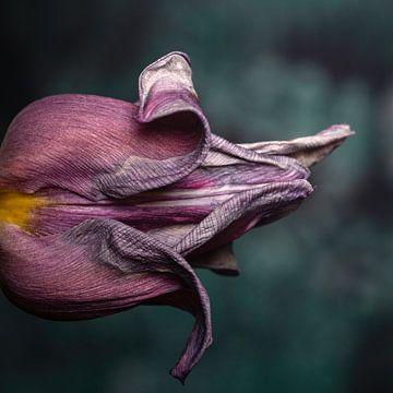 De krullen en textuur van een tulp van Tot Kijk Fotografie: natuur aan de muur