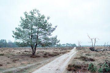 Wanderweg auf der Veluwe-Heide von Mascha Looije