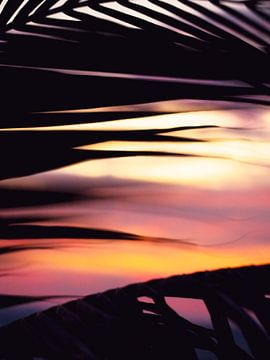 Palmenblatt bei Sonnenuntergang von Patruschka Hetterschij