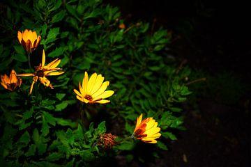 Blumen in der Nacht von Highthorn Photography