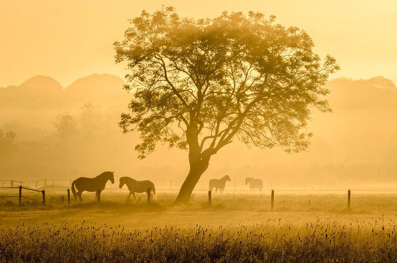Golden horses van Richard Guijt Photography