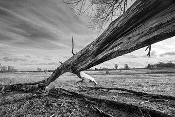 umgestürzter Baum von Bert-Jan de Wagenaar