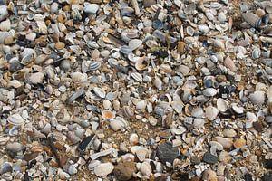 Schelpen op het strand van Nederland
