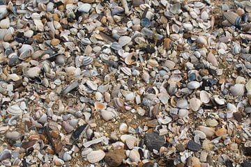 Schelpen op het strand van Nederland van Berthilde van der Leij