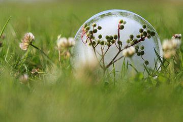 Ijsbloem in gras van Tot Kijk Fotografie: natuur aan de muur