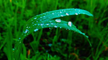 Raindrops  van Jenny Heß