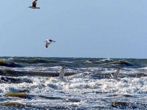 Meeuwen boven zee van