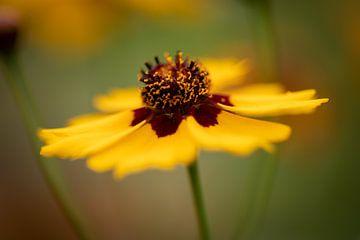 gele bloem van KB Design & Photography