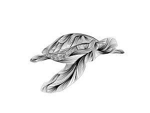 Poster Schildkröte - schwarz und weiß - Linien von Studio Tosca