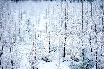Winterwald von Karijn | Fine art Natuur en Reis Fotografie