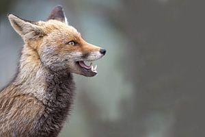 karakterportret van een vos