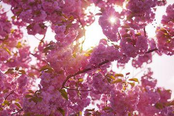 Blütenbaum von BVpix