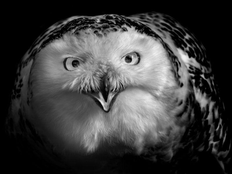 De blik van Ruud Peters