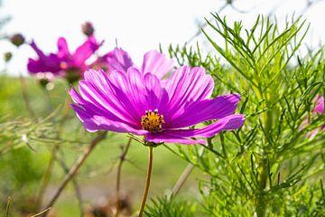 Prachtige bloem in de wind van Nel Diepstraten