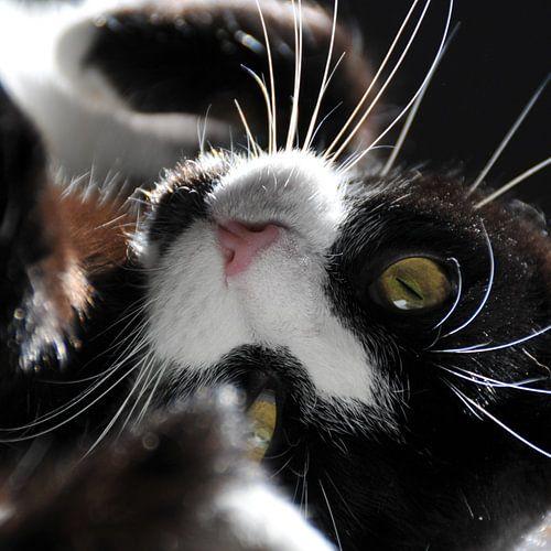 CAT - ORIGINAL