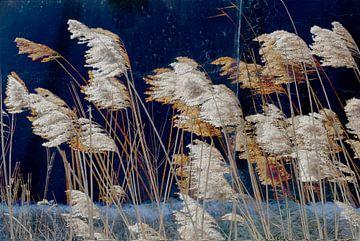 Dry grasses van Leopold Brix