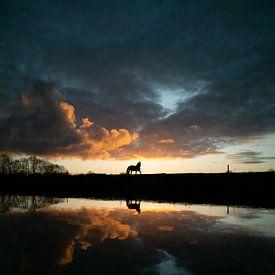 Pferd von Paul Glastra Photography
