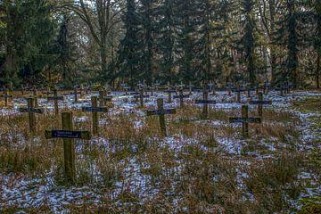 Cemetery of the insane van Mirjam Dijkstra