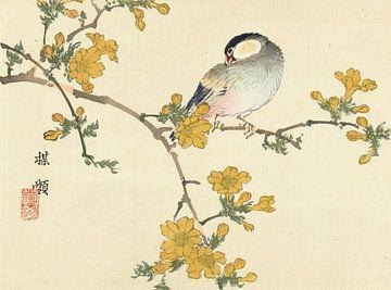 Singvogel auf blühendem Zweig, Kôno Bairei, 1893