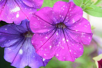 Blumen von Jelmer Beek