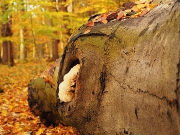 Coloration des feuilles sur Marjanne van der Linden