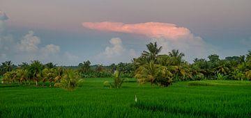 Rose wolk boven een rijstveld van Ellis Peeters