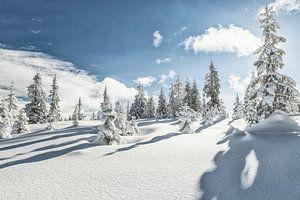 Winter op de Rossbrand