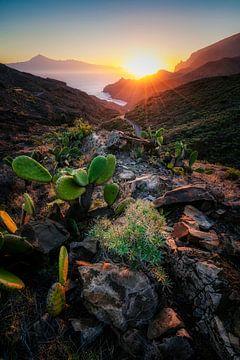 Familie Cactus ontwaakt van Joris Pannemans - Loris Photography