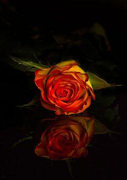 Red rose van Kaatje Fotografie