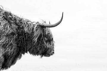 Schotse hooglander van Ronald van der Zon