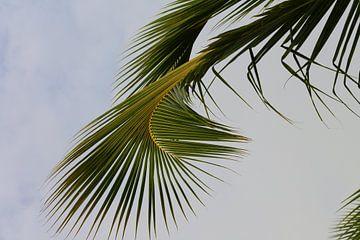 Curvy palmleaf 2 van Jelle Ursem