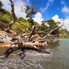 Die neuseeländische Küste von GoWildGoNaturepictures