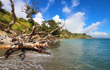 Nieuw-Zeelandse kustlijn van GoWildGoNaturepictures