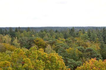 Uitzicht over het bos van Andrik van der Molen