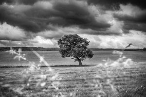 Zwart-wit landschap van Mark Bolijn