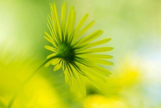 Yellow fantasy van D. Henriquez