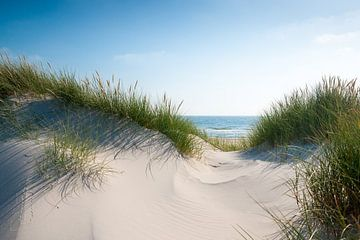 Daydream van Reiner Würz / RWFotoArt