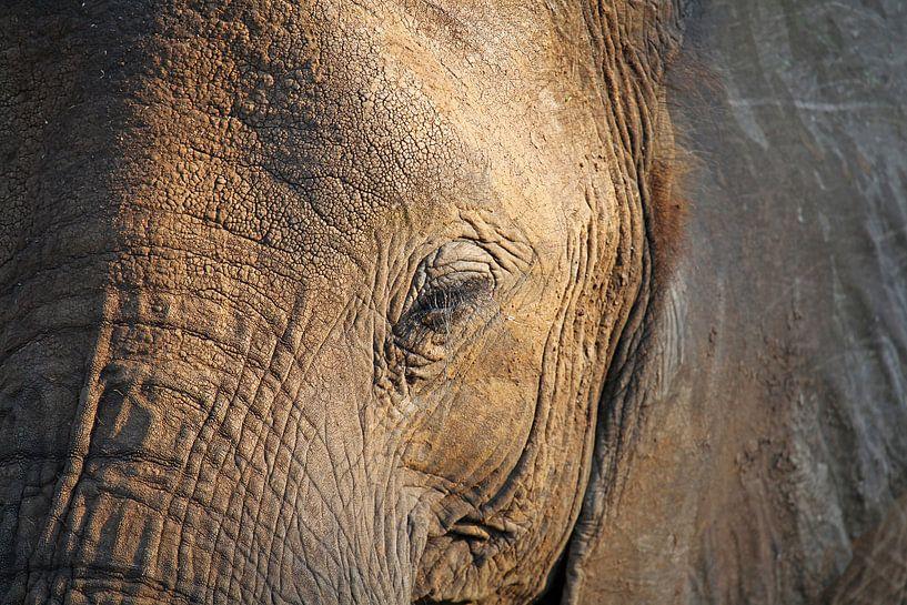 The Elephant - Africa wildlife  van W. Woyke