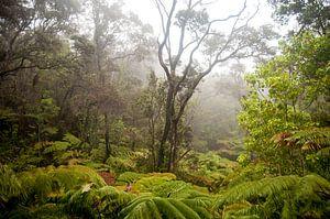 Regenwoud op het eiland van Hawaii
