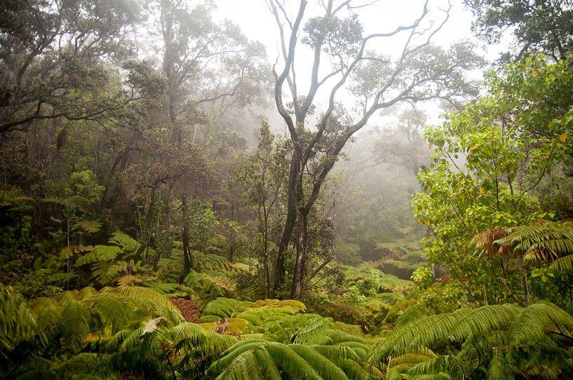 Regenwoud op het eiland van Hawaii van Ellis Peeters