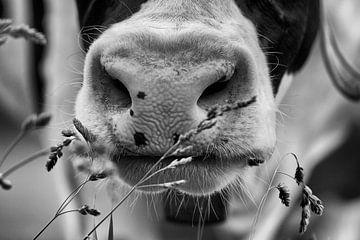 Neus van koe in zwart-wit van Jan Sportel Photography