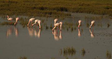 Flamingos van Vera Brok