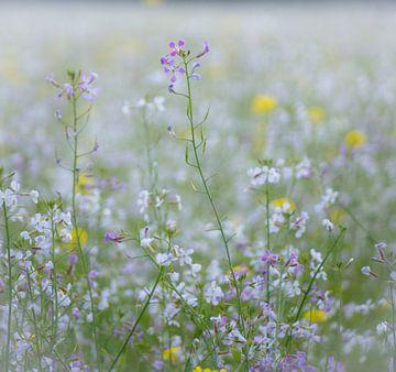 Wilde bloemen van Pascal Raymond Dorland