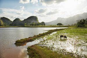De Vinales-vallei in Cuba, een beroemde toeristenbestemming en een groot tabaksteeltgebied