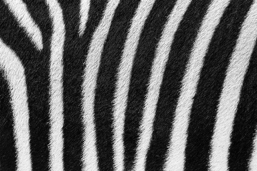 Zebrastrepen close up van Dennis van de Water