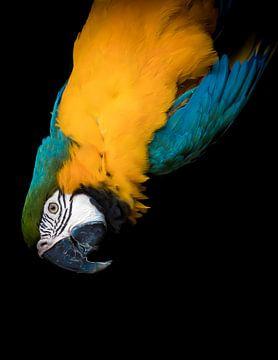 Papagei von Hennie Zeij